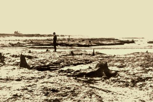 Photo of submerged forest at Meols stocks, from the Syrd Bird archives