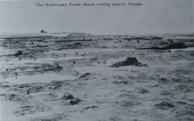 Submerged Forest Meols