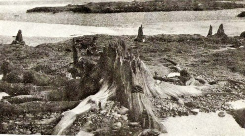 wirral history submerged forest
